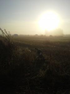 beagle pellolla