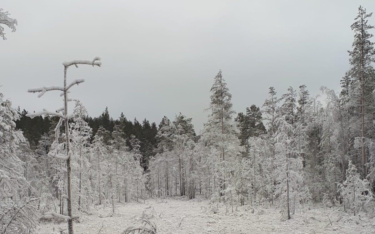 Vetelin Erä Ry